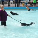 Baas Hond Zwemmen (17)A