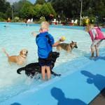 Baas Hond Zwemmen (23)A