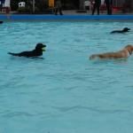 Baas Hond Zwemmen (7)A